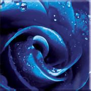 ROZA UNIVERSAL GLASS